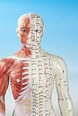Rustgevende shiatsu nek en schouderbehandeling